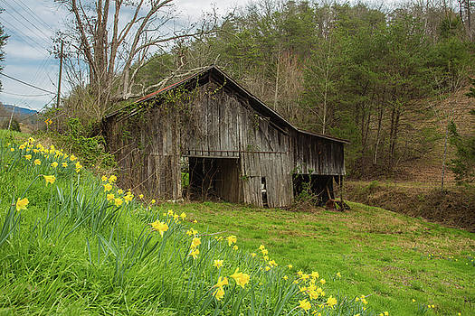 Old Barn Near Smoky Mountains With Daffodils by Carol Mellema
