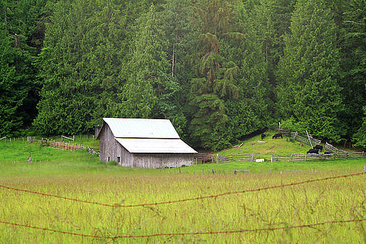 Art Block Collections - Old Barn on Orcas Island