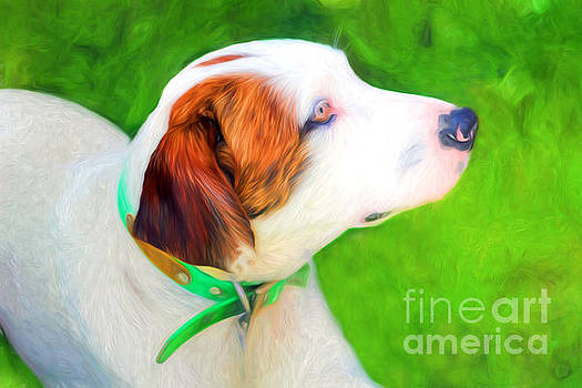 Old Bird Dog by Marion Johnson
