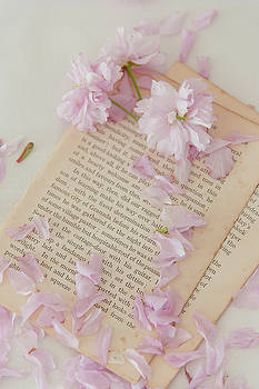 Old Book and Blossom by David Ridley