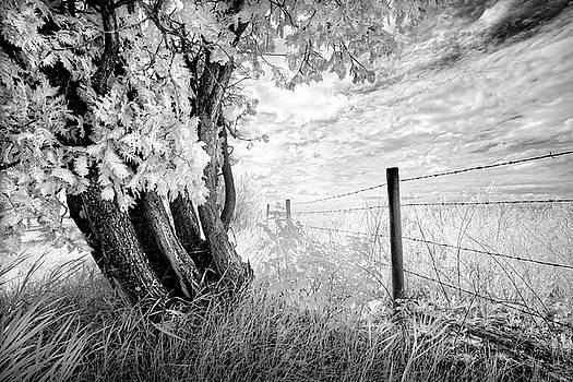 Old Cedar and Barbed Wire by Dan Jurak