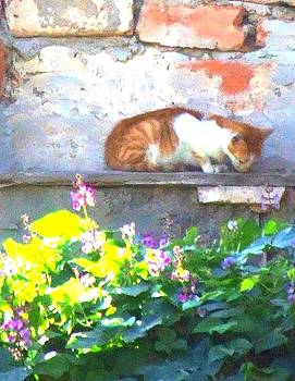 Old City Cat by Bill Vernon