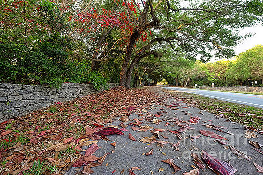 Old Cutler Road Coral Gables by Eyzen M Kim