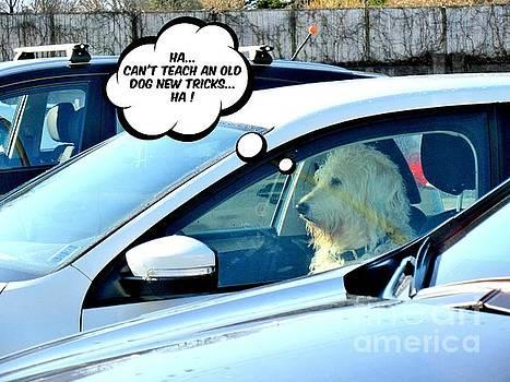 John Malone - Old Dog New Trick