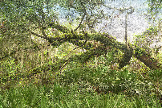 Old Florida  by Eagle Finegan