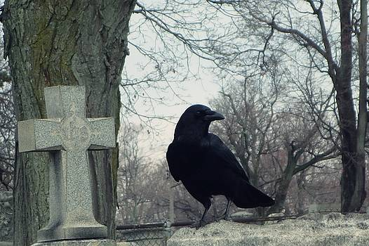 Gothicrow Images - Old Graveyard Blackbird On A Gray Winter Day