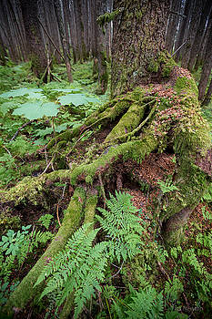 Old Growth by Tim Newton