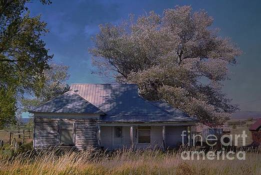 Old House and Silver Maple by Annie Gibbons