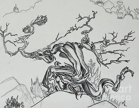 Old Juniper Dancing with the Wind -- field sketch by Dawn Senior-Trask