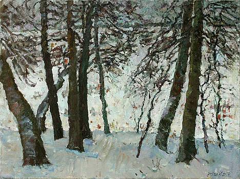 Old lindens by Juliya Zhukova