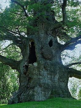 Old Man Tree by Digital Art Cafe