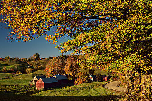 Reimar Gaertner - Old Maple trees in orange Fall color at Jenne Farm in Reading Ve