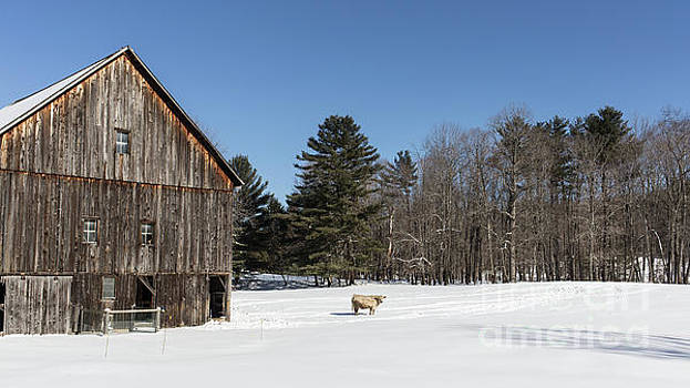 Edward Fielding - Old New England Barn and cow in winter