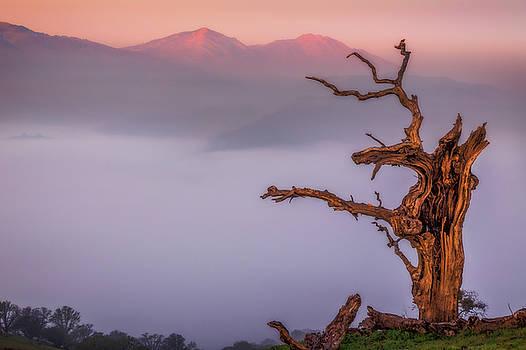 Marc Crumpler - Old Oak and Mt. Diablo on a Foggy Morning