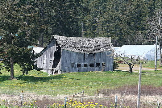 Old Oak Harbor Barn BA 9209 by Mary Gaines
