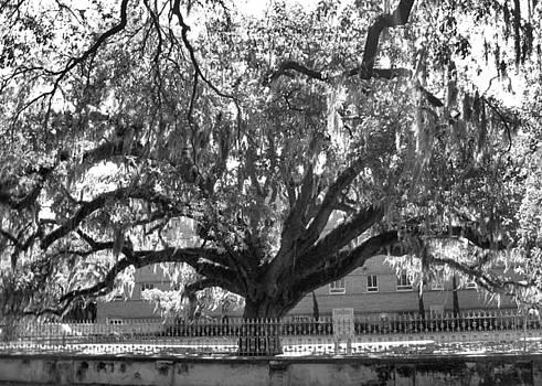 Old Oak Tree by Juliana  Blessington