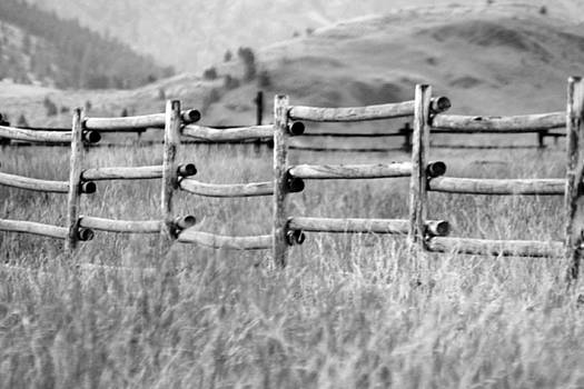 Old Rail Fence by Tiffany Vest