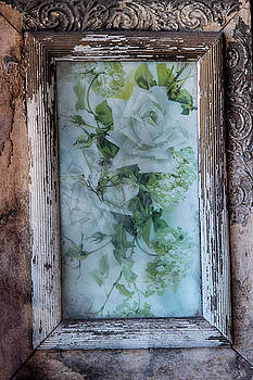 Guy Shultz - Old Rose Framed