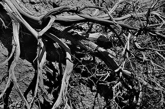 Old Sagebrush by Ron Cline