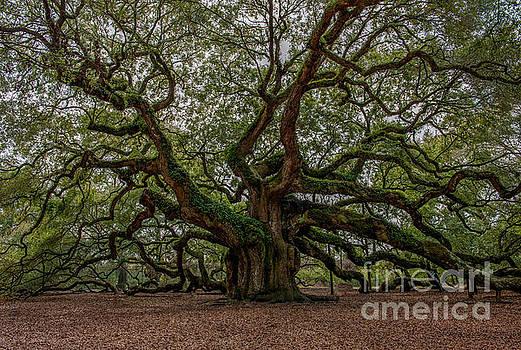 Dale Powell - Old South Angel Oak Tree