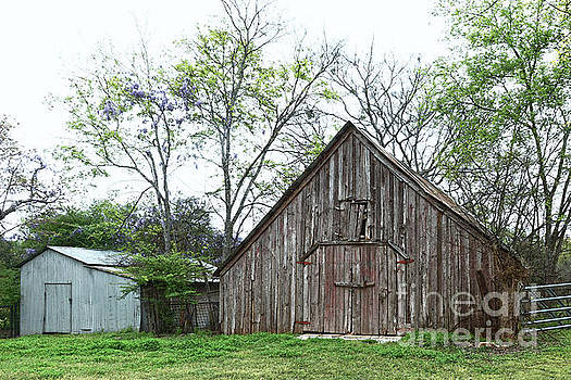 Old Texas Barn and Shed by Catherine Sherman