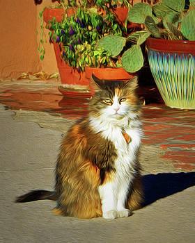 Nikolyn McDonald - Old Town Cat