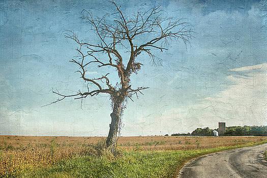 Old Tree  by Betty Pauwels