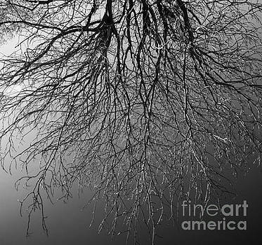 Old Tree Black and White by Stefano Senise