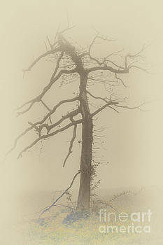 Dan Carmichael - Old Tree in Fog in the Blue Ridge FX