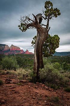 Rick Strobaugh - Old Tree in Sedona