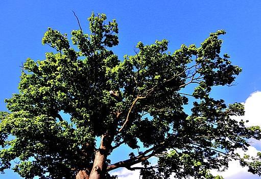 Old Tree by Nik Watt