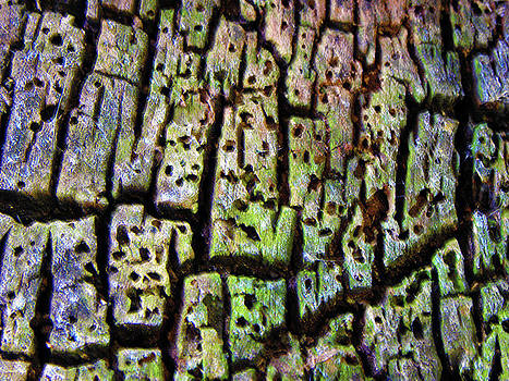 Old Tree Wood Abstract by Sandi OReilly