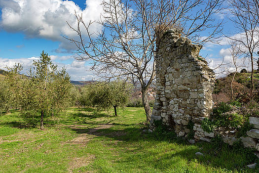 Old wall in olive grove by Steve Bisgrove