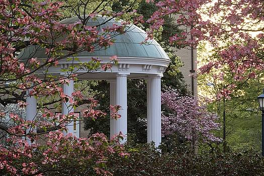 Old Well with Dogwoods by Matt Plyler