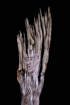 Old Wood by Johannes Stoetter