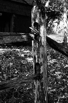 Old wooden fence by Terepka Dariusz