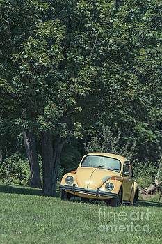 Edward Fielding - Old Yellow VW Bug under a tree