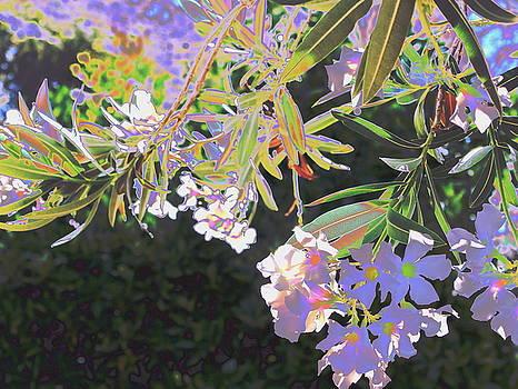 Oleander 2 by M Diane Bonaparte