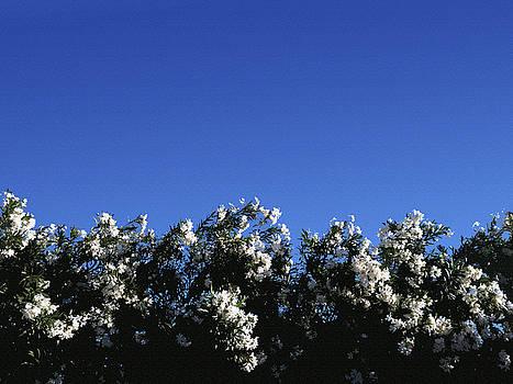 Stan  Magnan - Oleander Hedge