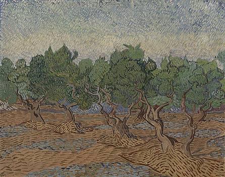 Olive Grove Saint Remy de Provence  November - December 1889 Vincent van Gogh 1853  1890 by Artistic Panda