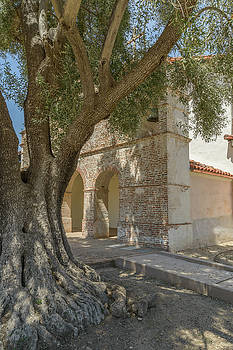 Olive Tree and Mission by Alexander Kunz