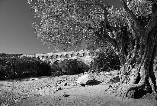 Olive Tree and Pont du Gard, France by Richard Goodrich