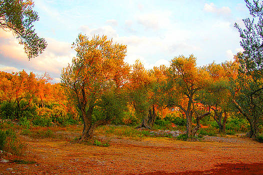 Olive Tree Forest by Marko Mitic