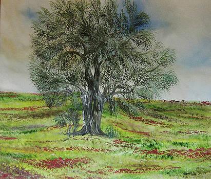 Olive tree no 1 by Anna Witkowska