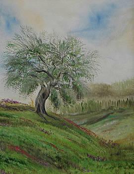 Olive tree no 2 by Anna Witkowska