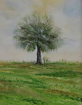 Olive tree no 3  by Anna Witkowska