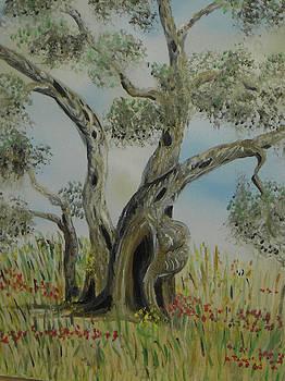Olive tree no 4 by Anna Witkowska