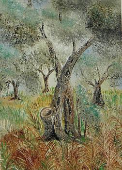 Olive tree no 5  by Anna Witkowska