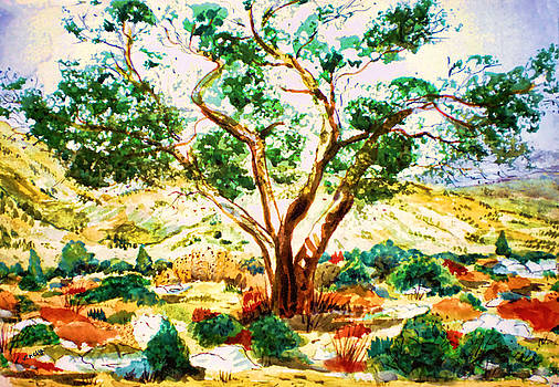 Valerie Anne Kelly - Olive tree-Landscape Painting By V.kelly