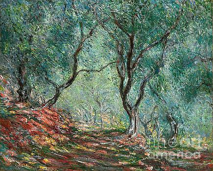claude monet - Olive tree wood in the moreno garden